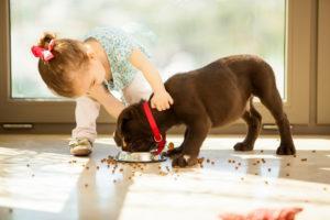little girl giving dog food